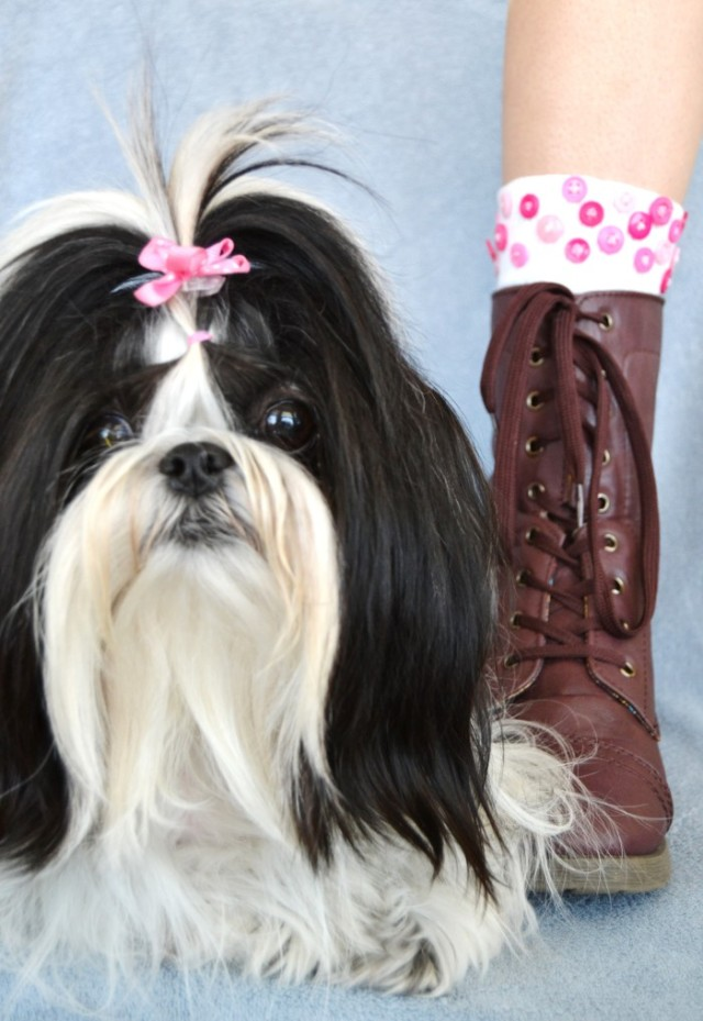 teen fashion blog diy button socks shih tzu